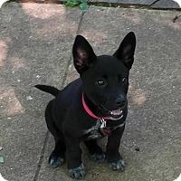 Adopt A Pet :: Bonnie Parker - Austin, TX