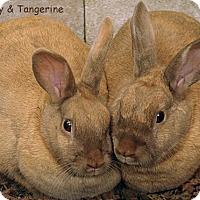 Adopt A Pet :: Barty & Tangerine - Santa Barbara, CA