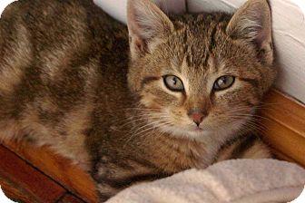 Cat Rescue Verona
