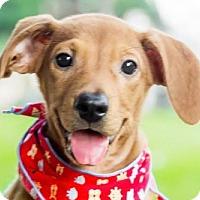 Adopt A Pet :: Kay - San Francisco, CA