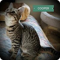 Adopt A Pet :: Cooper - Fairborn, OH