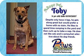 Retriever (Unknown Type)/German Shepherd Dog Mix Dog for adoption in Bealeton, Virginia - Toby