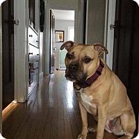 Adopt A Pet :: Loretta - Cleveland, OH