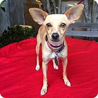 Adopt A Pet :: Sierra - Los Angeles, CA