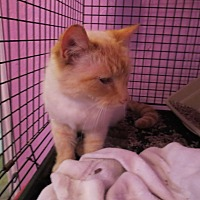 Adopt A Pet :: Dandy - Coos Bay, OR