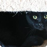 Adopt A Pet :: Mr. M - Boise, ID