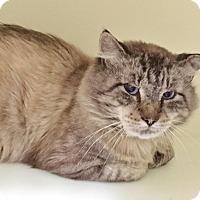 Adopt A Pet :: Denali - Salisbury, MA