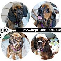 Adopt A Pet :: Maggie - Hazel Park, MI