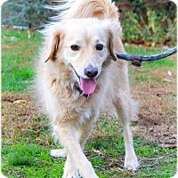 Adopt A Pet :: Greg - Huntington, NY