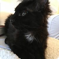 Adopt A Pet :: Joy - Brooklyn, NY
