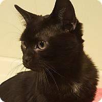 Adopt A Pet :: Quinlan - Grayslake, IL