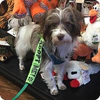 Adopt A Pet :: Skoobi - Centreville, VA