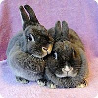 Adopt A Pet :: Emily - Los Angeles, CA