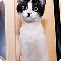 Adopt A Pet :: Casey - Irvine, CA