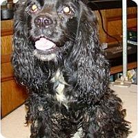 Adopt A Pet :: Dorian - Sugarland, TX