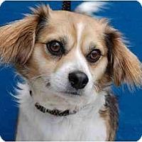 Adopt A Pet :: Charlie - San Francisco, CA