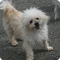 Adopt A Pet :: Marty - Tumwater, WA