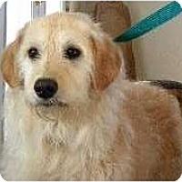 Adopt A Pet :: Barkley - Denver, CO