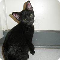 Adopt A Pet :: Crunch - Milwaukee, WI
