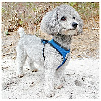 Adopt A Pet :: Phillip - Forked River, NJ
