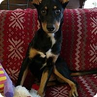 Adopt A Pet :: Aladdin - Homewood, AL