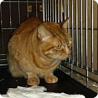 Adopt A Pet :: Woody - Chino, CA