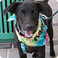 Adopt A Pet :: Frank - Richmond, VA