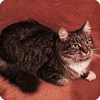 Adopt A Pet :: Gretchen - Harrisburg, NC