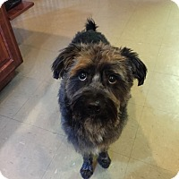 Adopt A Pet :: Tyner - Russellville, KY
