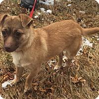 Adopt A Pet :: Gummy Bear - Bloomfield, CT