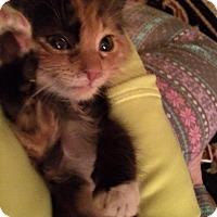 Adopt A Pet :: Reese - East McKeesport, PA