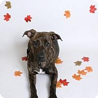 Adopt A Pet :: Baby - Redding, CA
