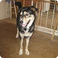 Adopt A Pet :: Seth - San Antonio, TX