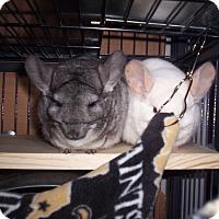 Adopt A Pet :: Caitin & Dawn - Avondale, LA