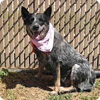Adopt A Pet :: *SADIE - Norco, CA