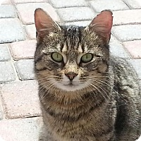Adopt A Pet :: Coco - Rochester Hills, MI