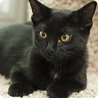 Adopt A Pet :: Parker - Great Falls, MT