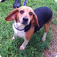 Adopt A Pet :: Wren - Aurora, IL