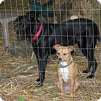 Adopt A Pet :: Navi AD 11-16-16 - Preston, CT