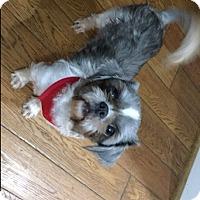 Adopt A Pet :: Darla - Honeoye Falls, NY