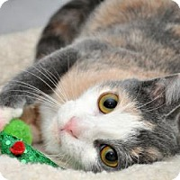 Adopt A Pet :: Pebbles - South Bend, IN