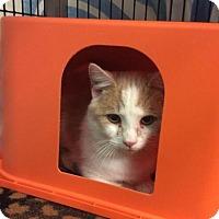 Adopt A Pet :: Dobber - Janesville, WI