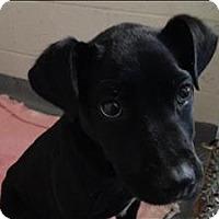 Adopt A Pet :: 16-12-3743 Poppy - Dallas, GA