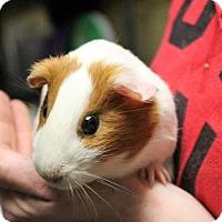 Adopt A Pet :: Leila - West Des Moines, IA