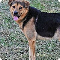 Shepherd (Unknown Type) Mix Dog for adoption in Jackson, Mississippi - Rascal