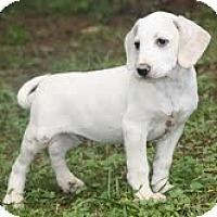 Adopt A Pet :: Elmer - Staunton, VA