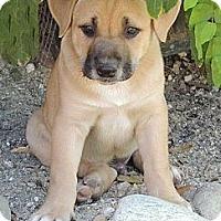 Adopt A Pet :: Humphrey - La Habra Heights, CA