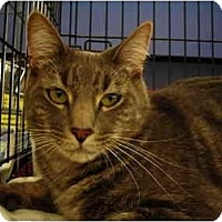 Adopt A Pet :: Bently - Riverside, RI