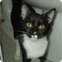 Adopt A Pet :: Checkers - San Ramon, CA