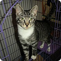 Adopt A Pet :: Adam - Bayonne, NJ